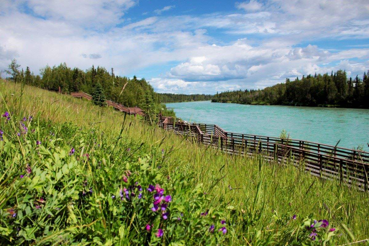 grasses, boardwalk and Kenai River